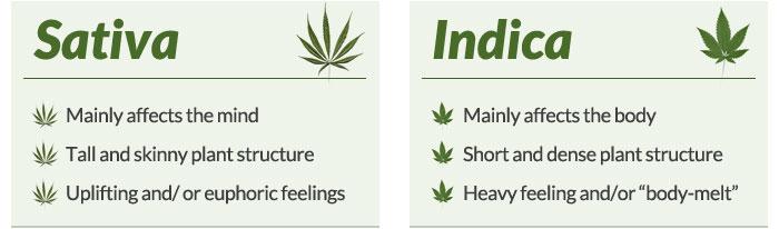 Fruitful medical marijuana Cannabis dispensary Sacramento California